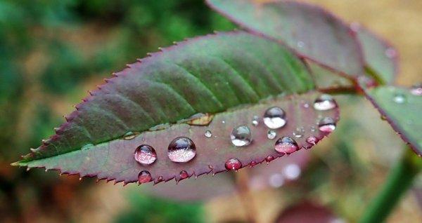 Умеренный дождь: о погоде в Алтайском крае 25 сентября