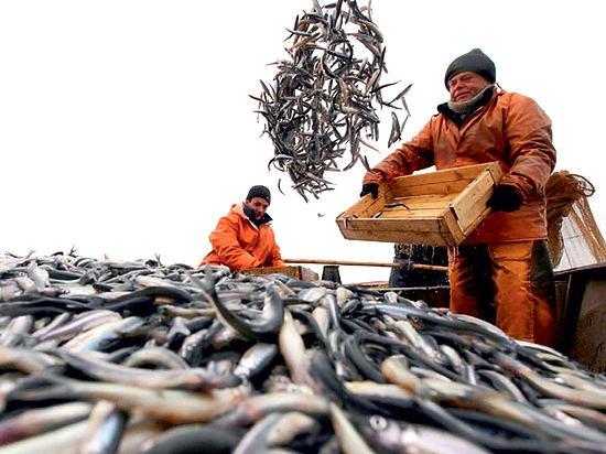 ВТБ поддержит рыбопромышленные предприятия Дальнего Востока