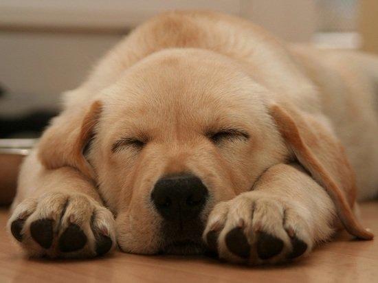Живодер из Барнаула выбросил из окна щенка, нагадившего на кровать