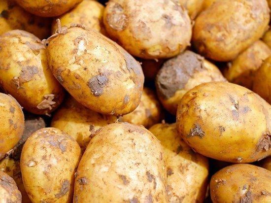 Цены на картофель увеличились вдвое в Алтайском крае