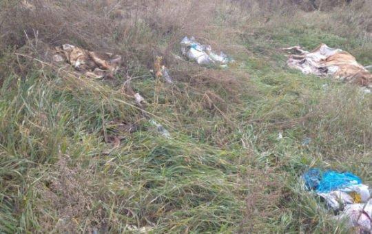 На Алтае обнаружили свалку трупов животных
