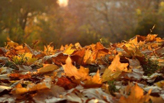 Погода 22 октября в Алтайском крае: похолодание, дожди и ветер