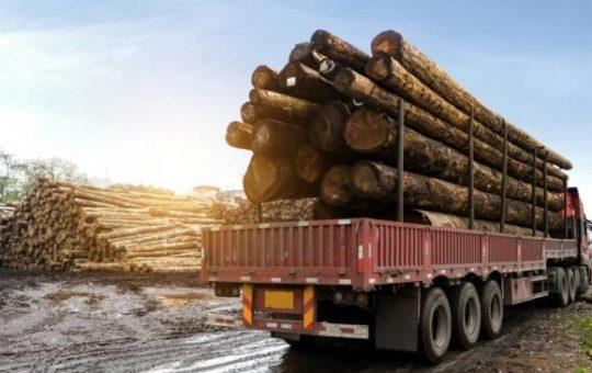 В Алтайском крае стало больше контрабанды леса