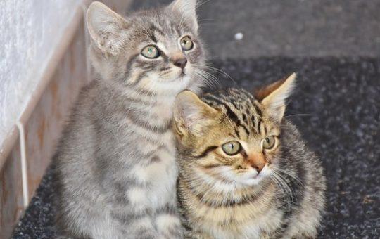 В подвале барнаульской пятиэтажки замуровали живых кошек и котят